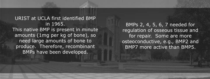 URIST at UCLA first identified BMP in 1965.