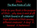 dna the blue prints of life