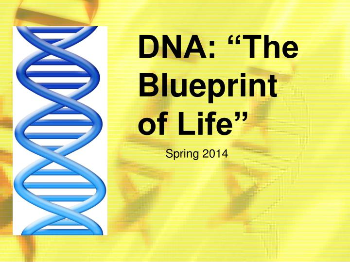 Ppt dna the blueprint of life powerpoint presentation id4780281 dna the blueprint of life malvernweather Image collections