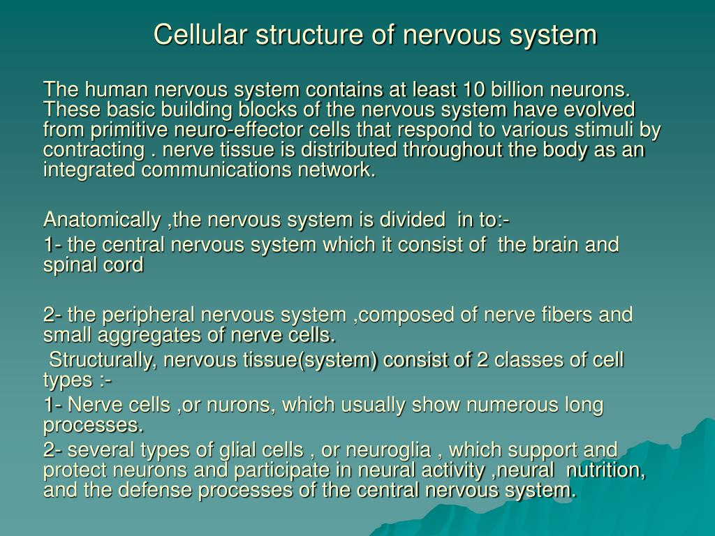 Ppt Cellular Structure Of Nervous System Powerpoint Presentation