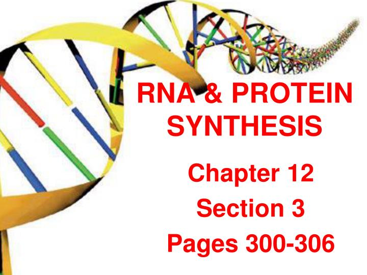rna protein synthesis n.