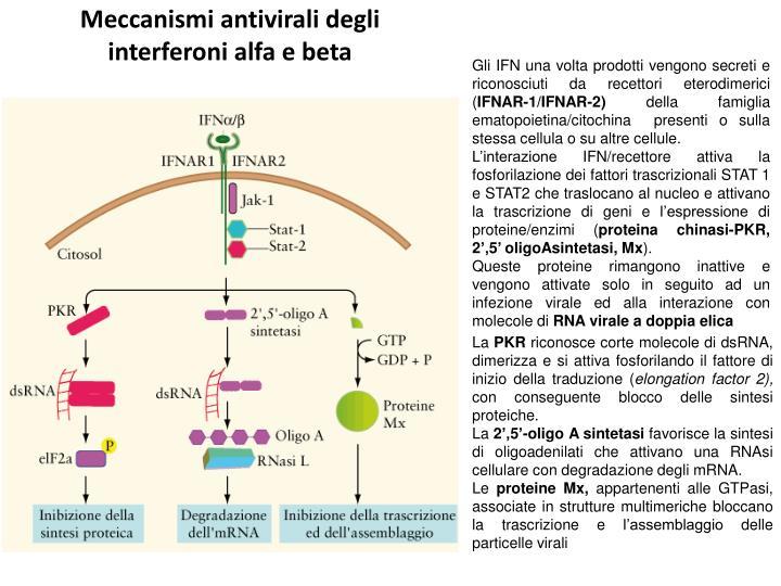 Meccanismi antivirali degli interferoni alfa e beta