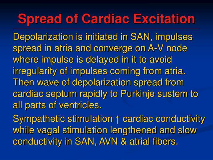 Spread of Cardiac Excitation