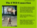 the cwd connection