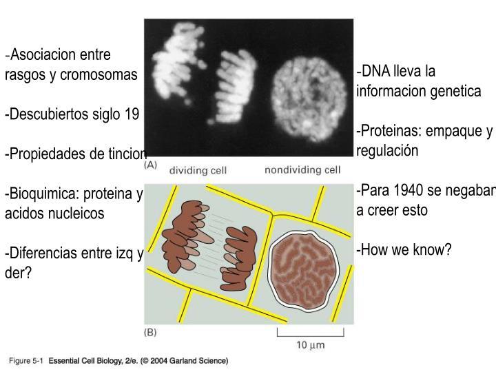 05 01 chromosomes jpg