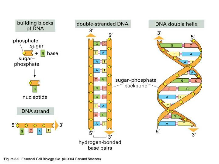 05_02_DNA.jpg