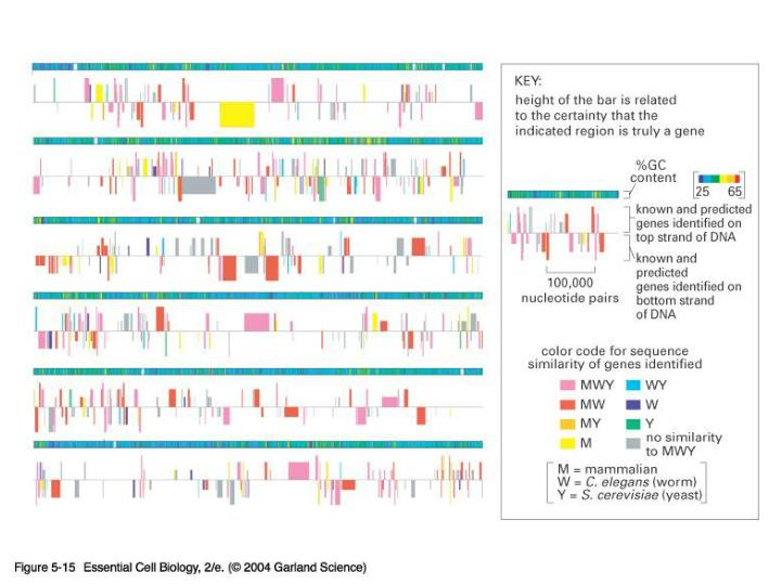 05_15_Drosophila gene.jpg