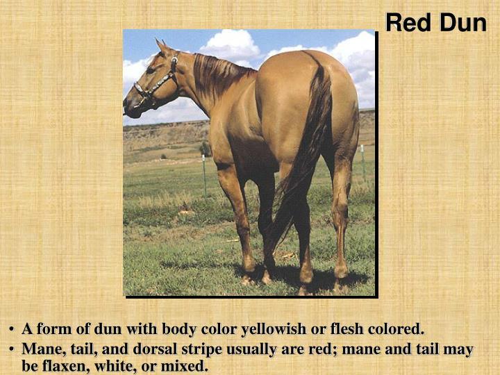Red Dun