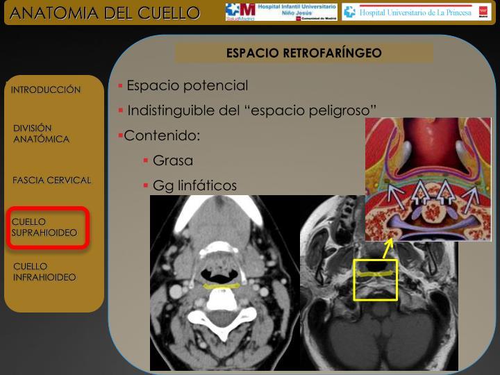 PPT - ANATOMIA DEL CUELLO PowerPoint Presentation - ID:4787539