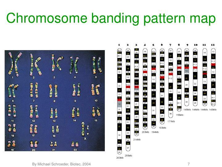 Chromosome banding pattern map