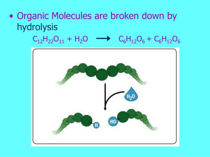Organic Molecules are broken down by