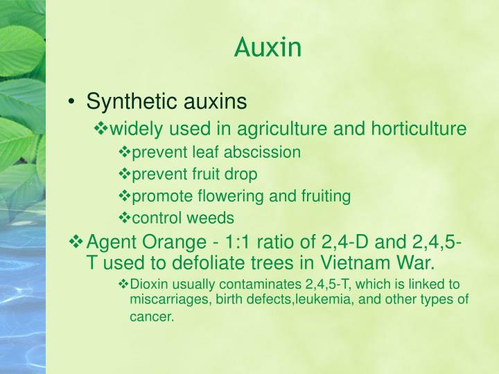 plant growth auxin The auxin collects on the dark side of the shoot therefore, more growth will occur on this side of the plant and the shoot will gradually lean toward the sun now it can now make the best use of the environment this effect can be observed with house plants.