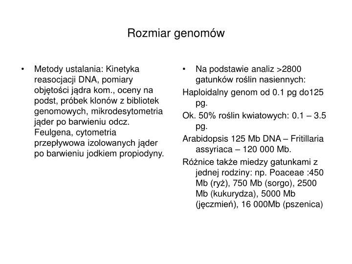 Metody ustalania: Kinetyka reasocjacji DNA, pomiary objętości jądra kom., oceny na podst, próbek klonów z bibliotek genomowych, mikrodesytometria jąder po barwieniu odcz. Feulgena, cytometria przepływowa izolowanych jąder po barwieniu jodkiem propiodyny.