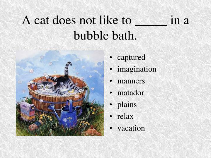 A cat does not like to _____ in a bubble bath.