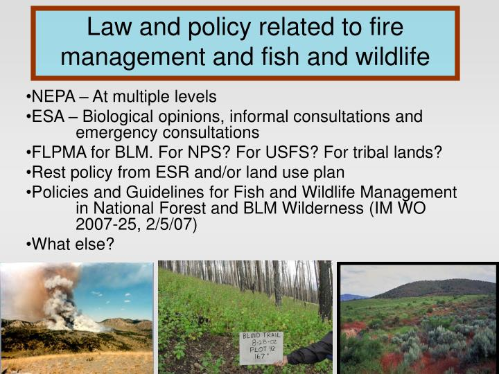 Law and policy related to fire management and fish and wildlife