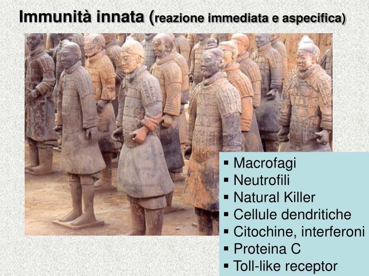 Immunità innata (