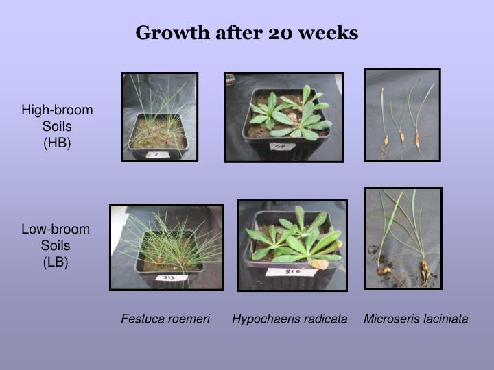 Growth after 20 weeks