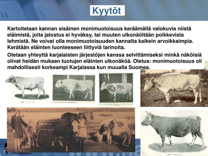 Kartoitetaan kannan sisäinen monimuotoisuus keräämällä valokuvia niistä eläimistä, joita jalostus ei hyväksy, tai muuten ulkonäöltään poikkevista lehmistä. Ne voivat olla monimuotoisuuden kannalta kaikein arvoikkaimpia. Kerätään eläinten luonteeseen liittyviä tarinoita.