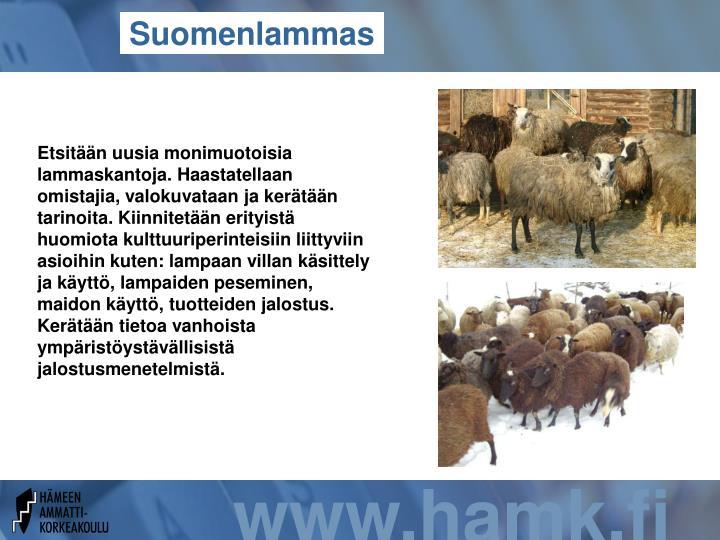 Suomenlammas