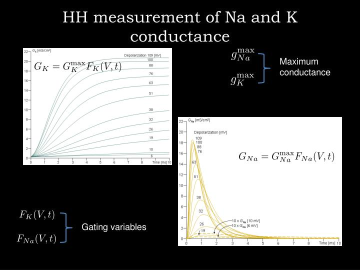 HH measurement of Na and K conductance