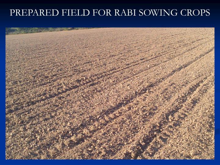 PREPARED FIELD FOR RABI SOWING CROPS