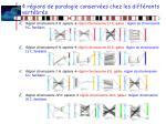 4 r gions de paralogie conserv es chez les diff rents vert br s