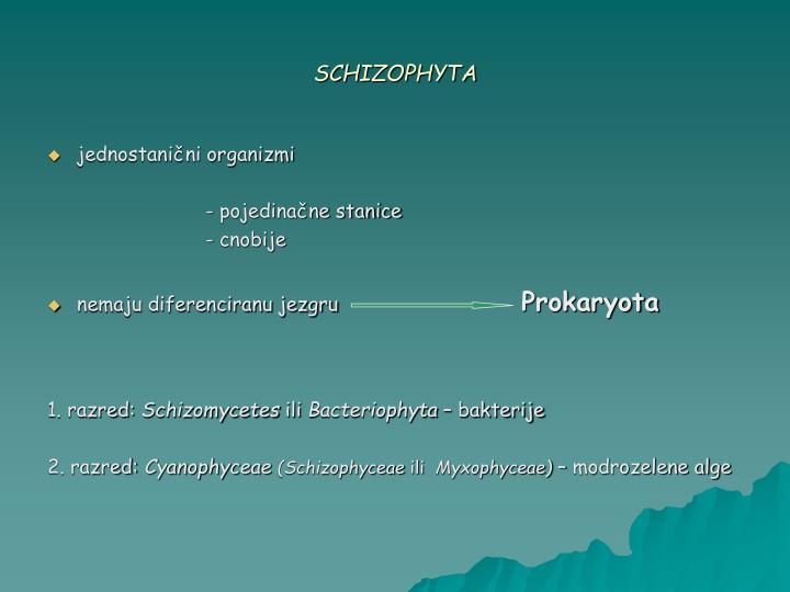Schizophyta