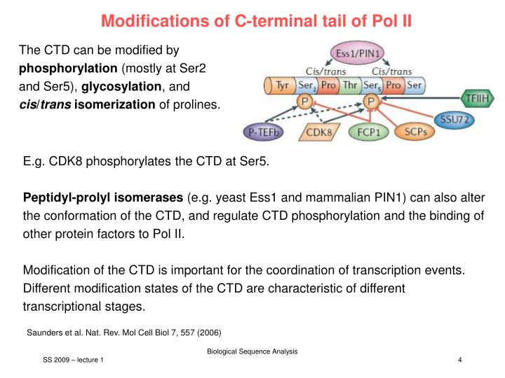 Modifications of C-terminal tail of Pol II