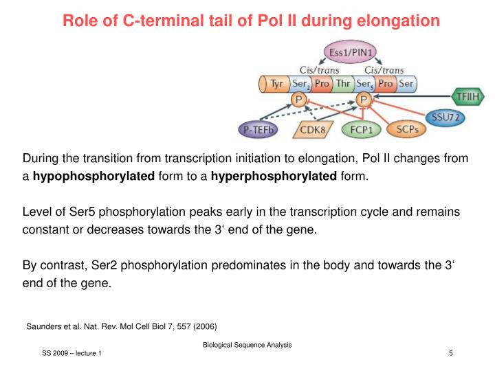 Role of C-terminal tail of Pol II during elongation