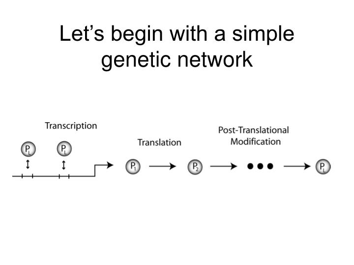 Let s begin with a simple genetic network