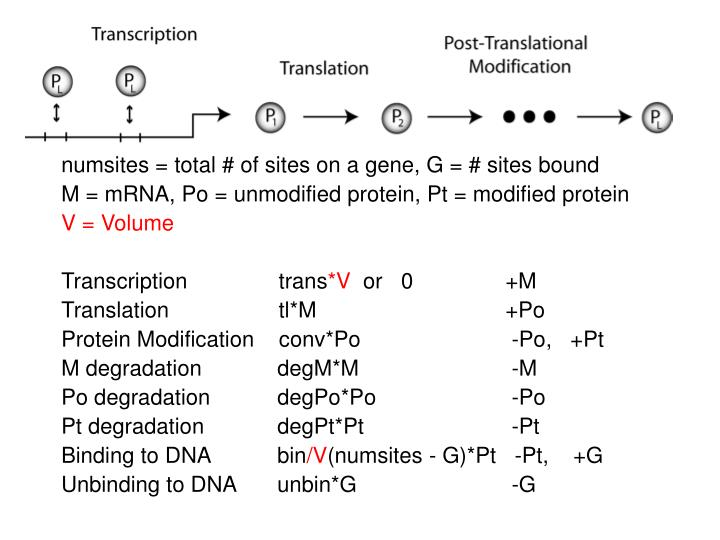 numsites = total # of sites on a gene, G = # sites bound