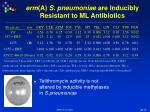 erm a s pneumoniae are inducibly resistant to ml antibiotics