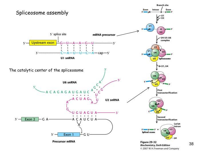 Spliceosome assembly
