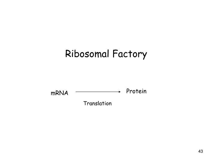 Ribosomal Factory