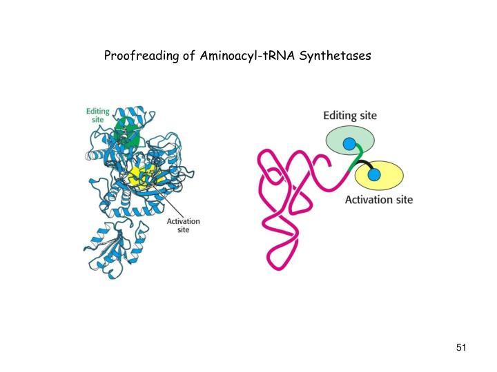 Proofreading of Aminoacyl-tRNA Synthetases