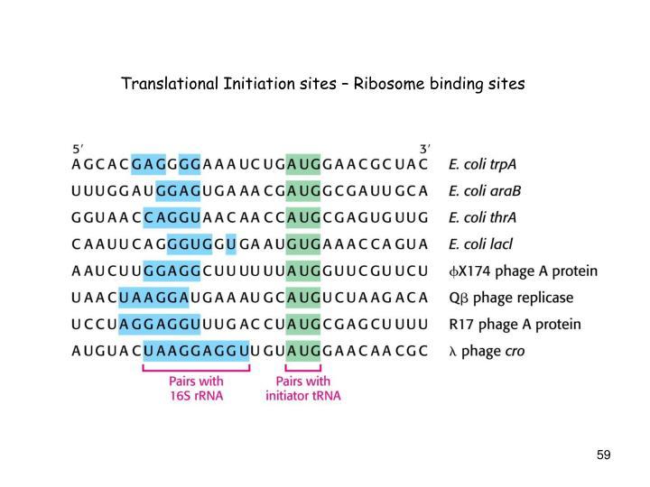 Translational Initiation sites – Ribosome binding sites