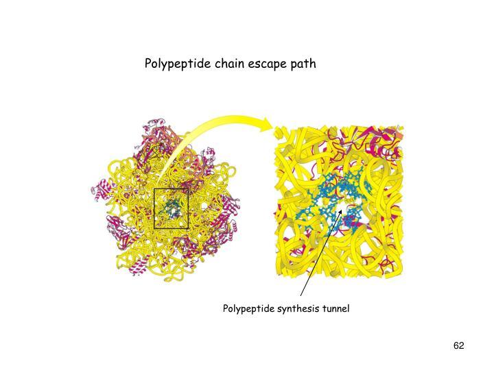 Polypeptide chain escape path