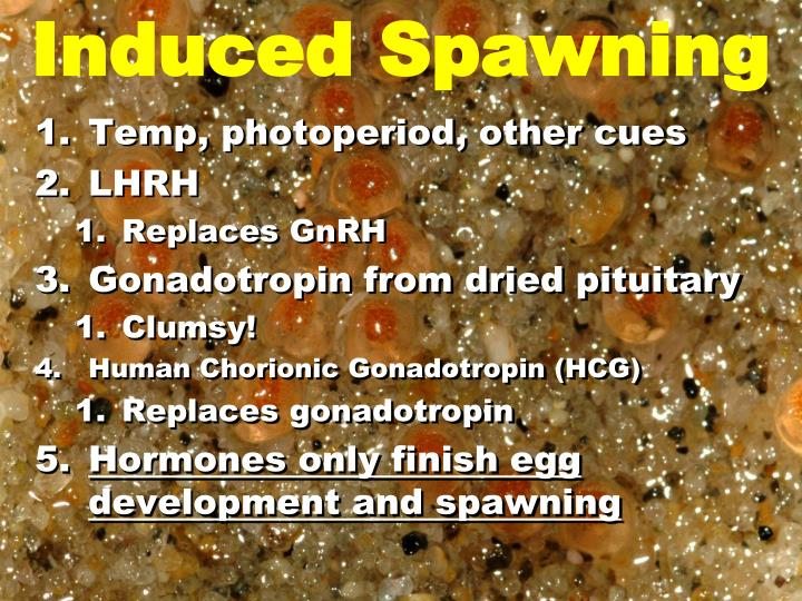 Induced Spawning