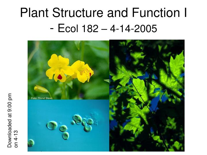 plant structure and function i e col 182 4 14 2005 n.