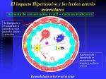 el impacto hipertensivo y los lechos arterio arteriolares14