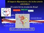 el impacto hipertensivo y los lechos arterio arteriolares47