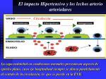 el impacto hipertensivo y los lechos arterio arteriolares6