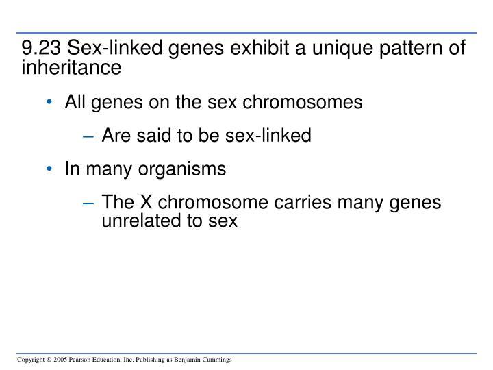9.23 Sex-linked genes exhibit a unique pattern of inheritance