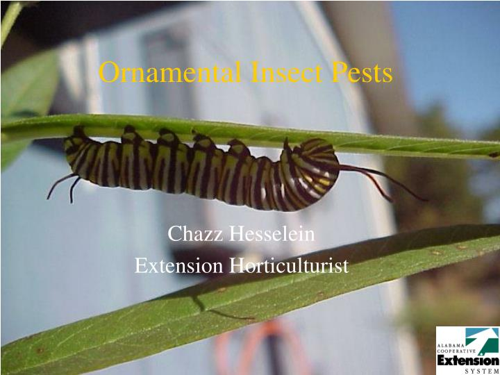 ornamental insect pests n.