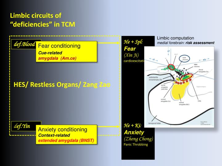 Limbic circuits of