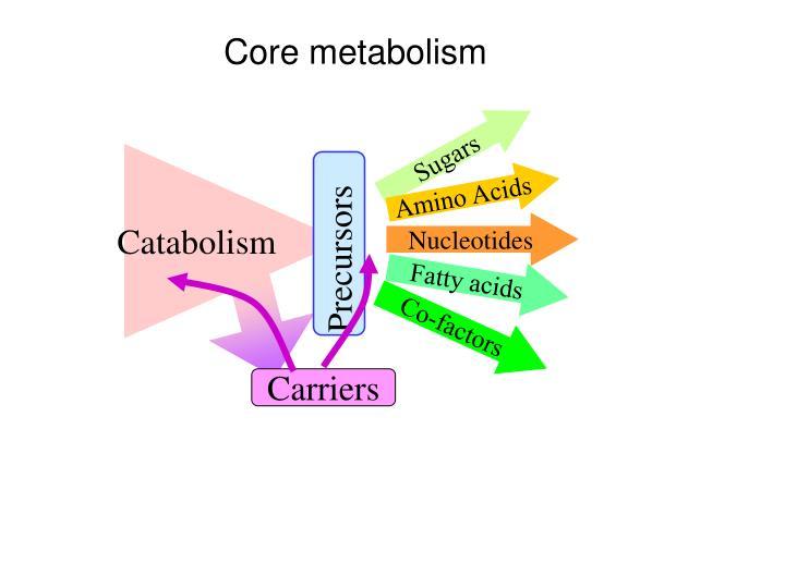 Catabolism