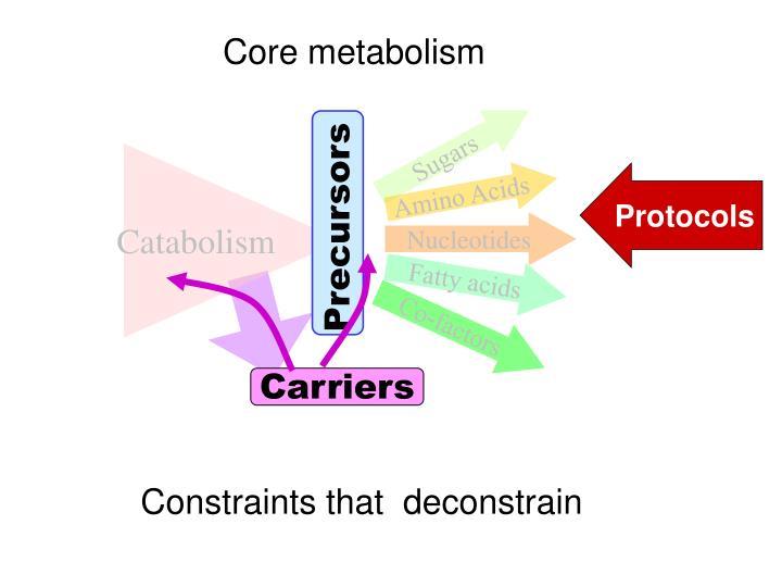 Core metabolism