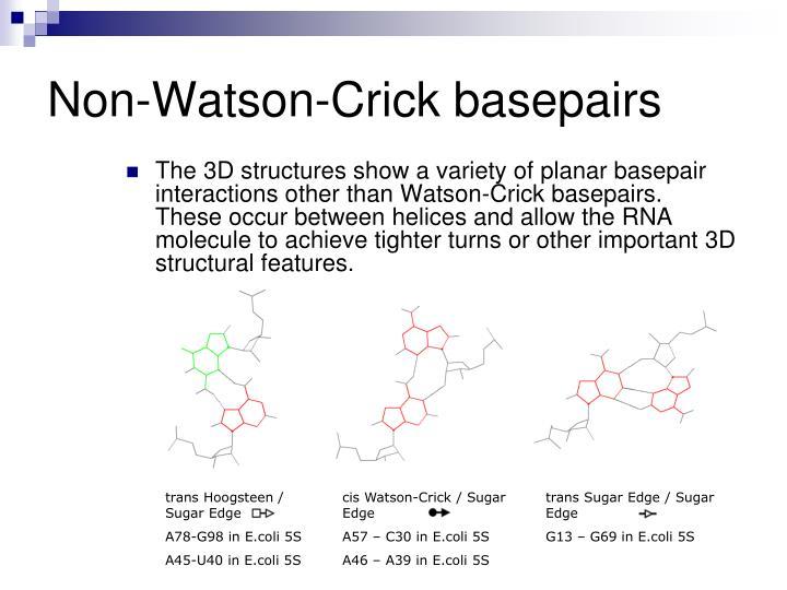 Non-Watson-Crick basepairs