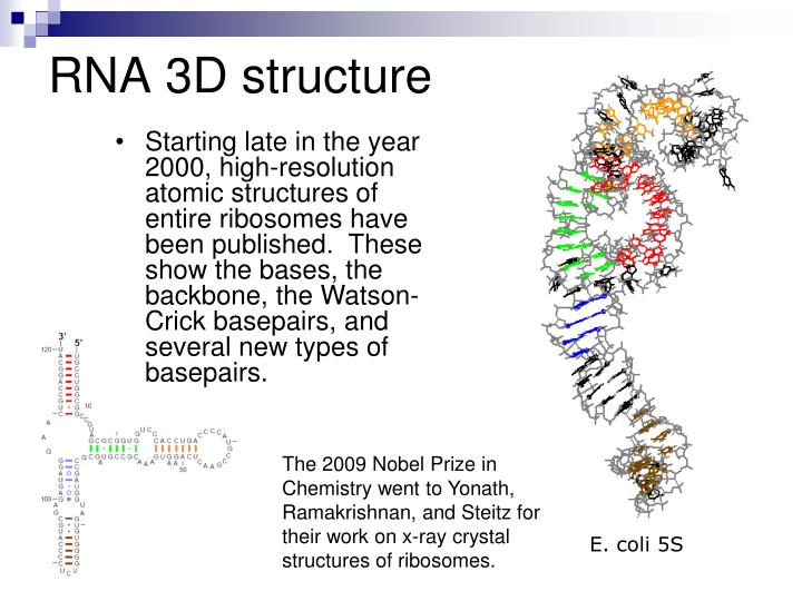RNA 3D structure