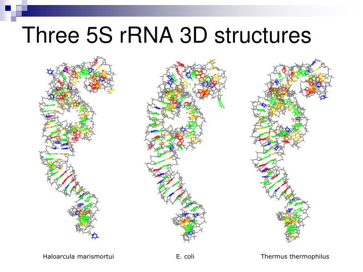 Three 5S rRNA 3D structures